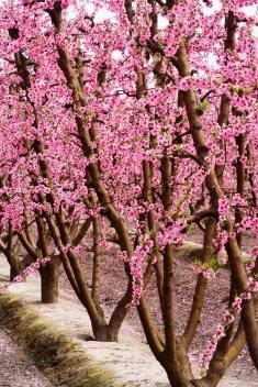 Blossom 9